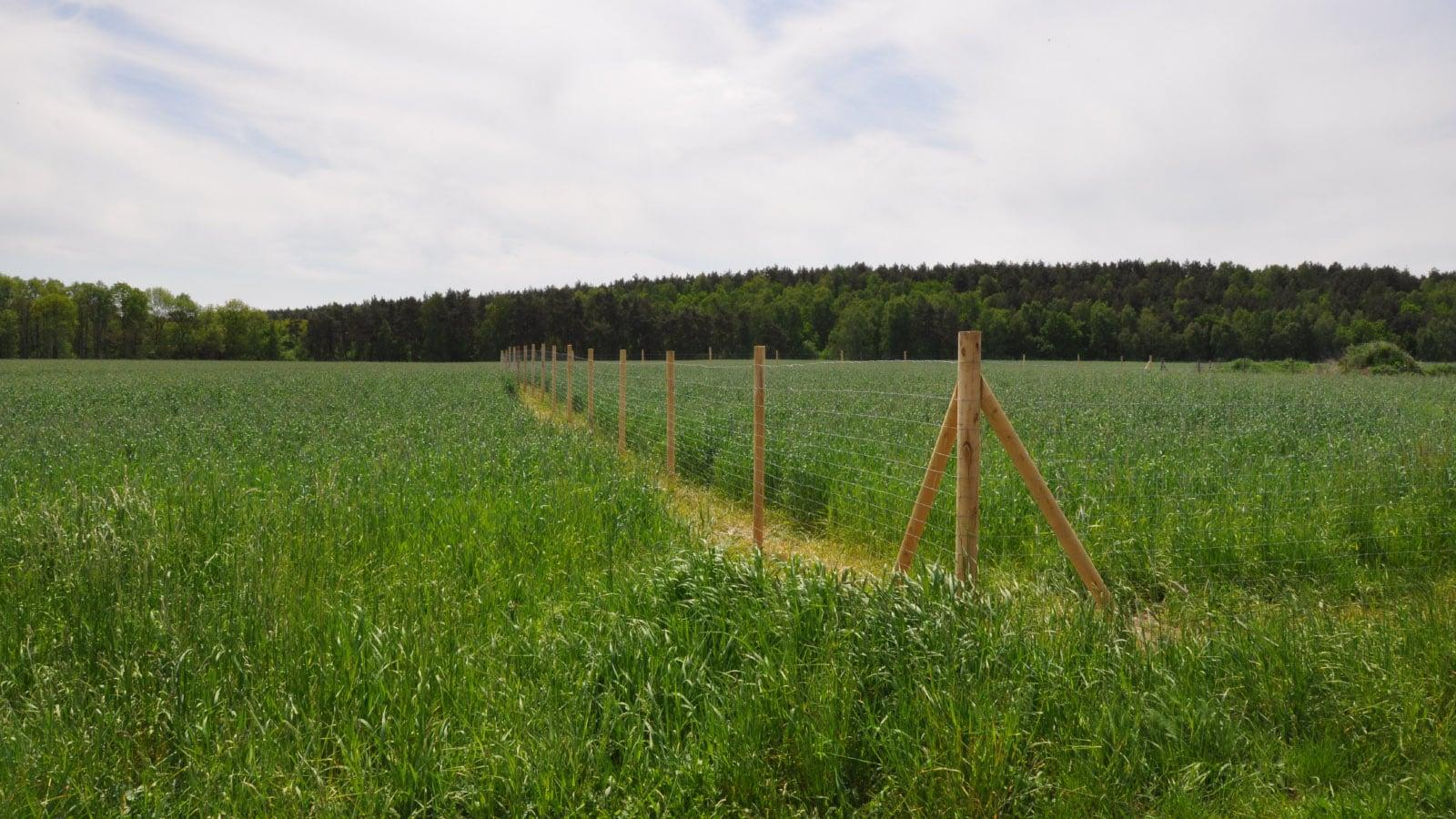 Easyfence - ogrodzenie łąka